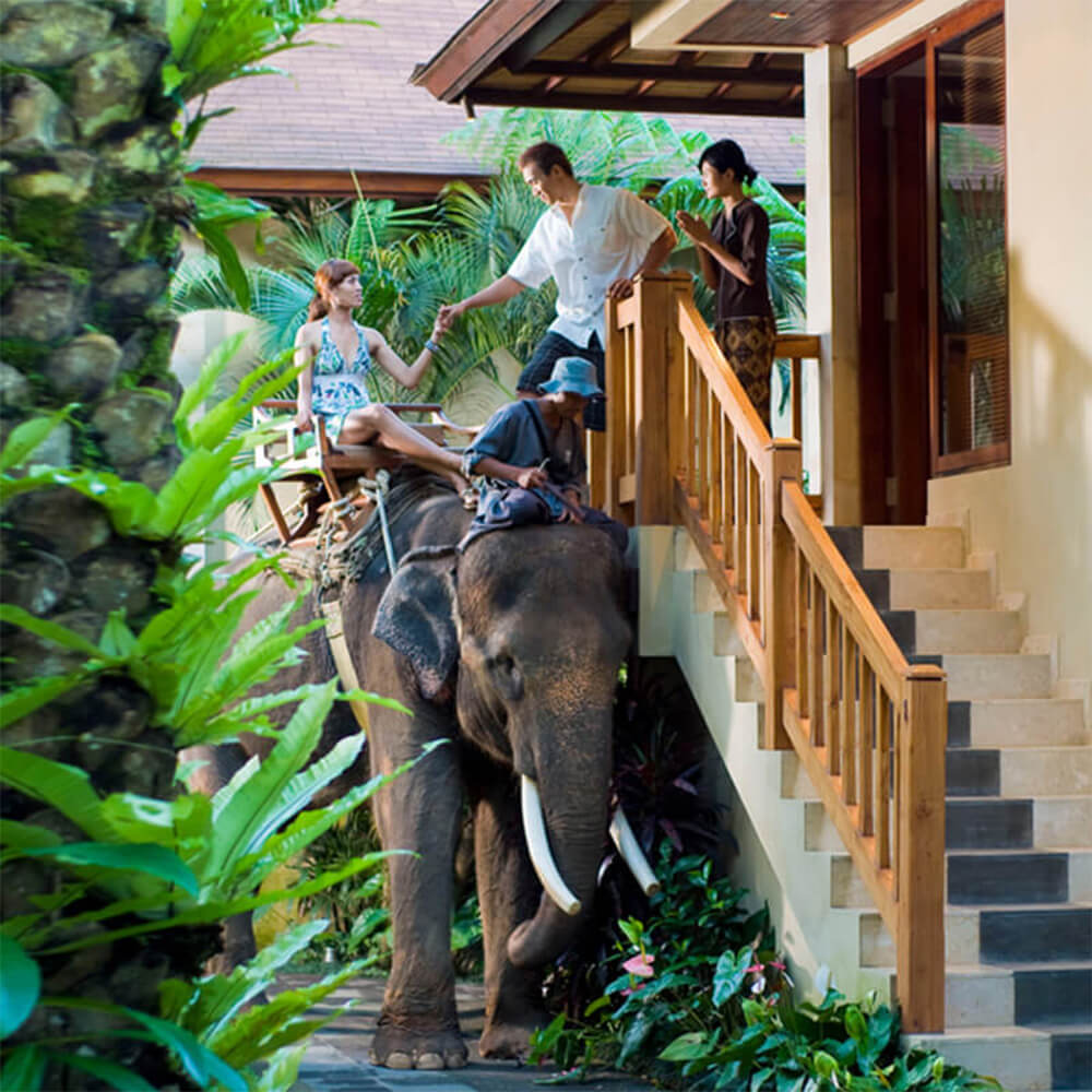 section-home-bottom-chaeffeur-mason-elephant-park-and-lodge
