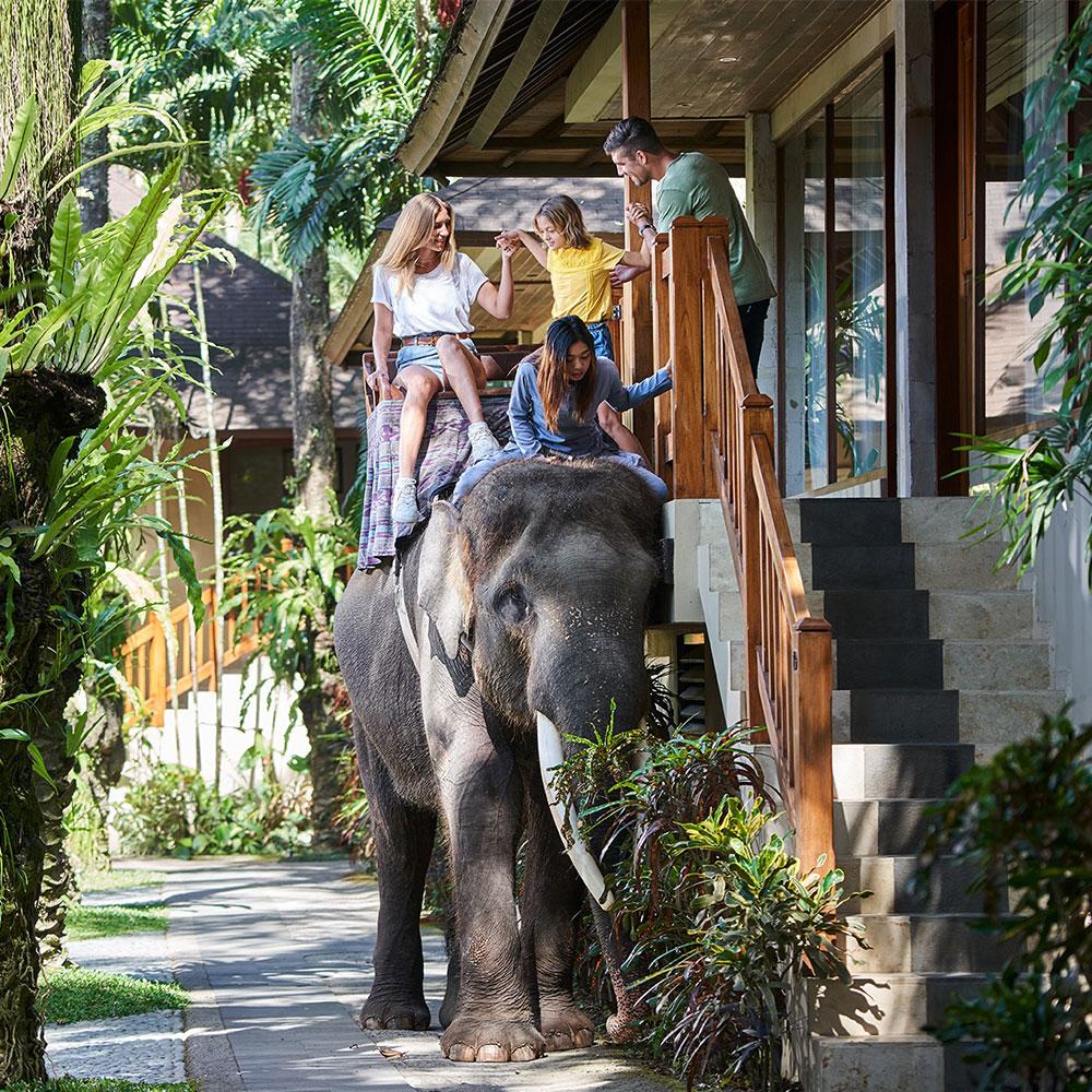 Elephant-Chauffeur-min-1000x1000